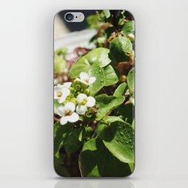 WaterBless iPhone Skin