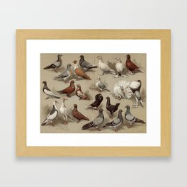 Vintage Pigeon Breeds Chart Framed Art Print
