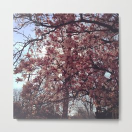 Spring Came Slowly Metal Print