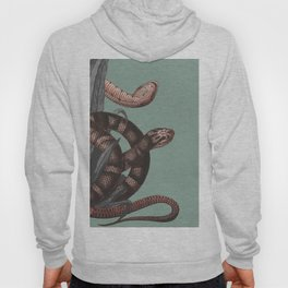 Snakes (animals collection) Hoody