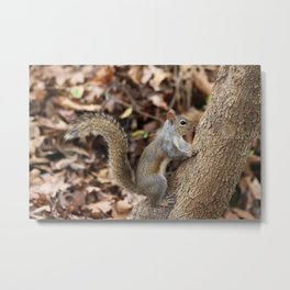 Fall squirrel Metal Print
