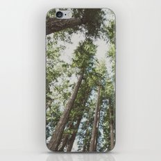Forest Sky - Green Trees Reaching into the Clouds iPhone & iPod Skin