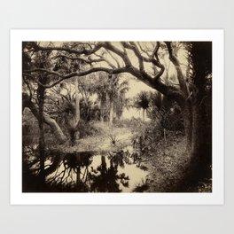 Live Oaks and Palmetto, Everglades, Florida, Vintage Art Print