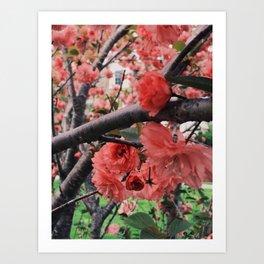 Blossom Brouhaha Art Print