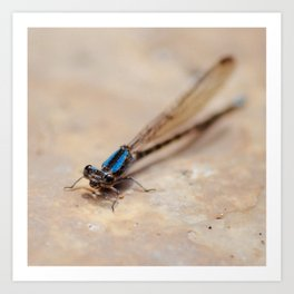Dragonfly. Art Print