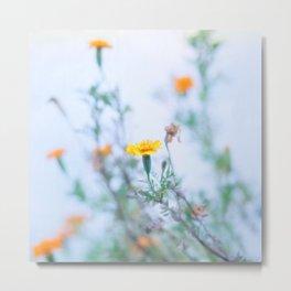 Where Bashful Flowers Blow Metal Print