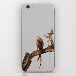 Hawk Eagle with its Catch iPhone Skin