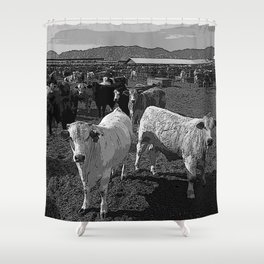 Black & White California Catte Yard Pencil Drawing Photo Shower Curtain