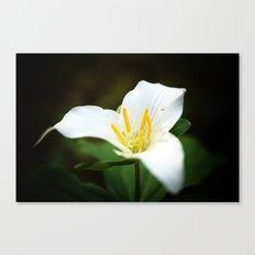 Flower photography Trillium Flowers Nature photography Canvas Print