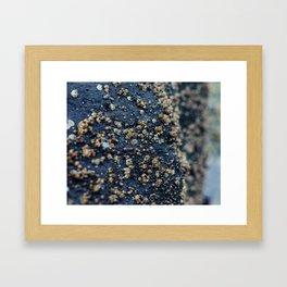 Barnacle Framed Art Print