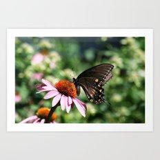 Eastern Tiger Swallowtail - Black Morph Art Print
