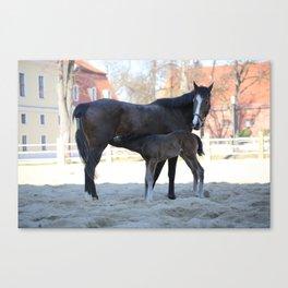Pferde Canvas Print