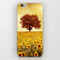 sunflowers iPhone & iPod Skins featuring lone tree & sunflowers field by Viviana Gonzalez
