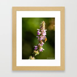 Feeding time Framed Art Print