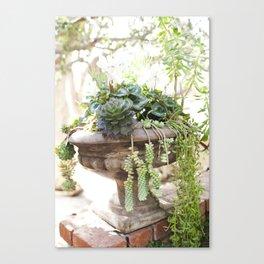 Overflowing Succulents Canvas Print