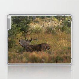 Red deer, rutting season Laptop & iPad Skin