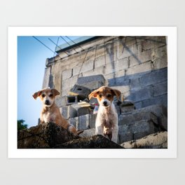 Lovely Puppies of Mauritius Art Print