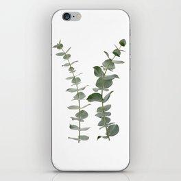 Eucalyptus Branches I iPhone Skin