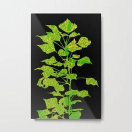 Populus tree in London Metal Print