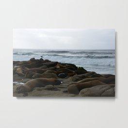 San Diego Sea Lions.....Sunbathing Metal Print