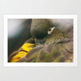 Burrowing Parrot Art Print