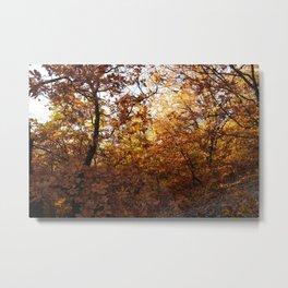 oak land Metal Print