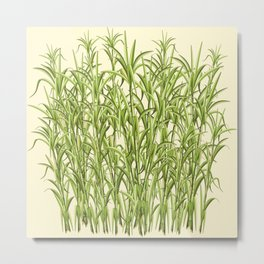 Sugar Cane Exotic Plant Pattern Metal Print
