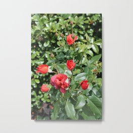 Red English Roses Metal Print