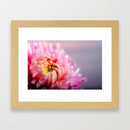 Pink Chrysanthemum Flower Framed Art Print