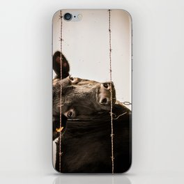How Now, Brown Cow? iPhone Skin