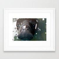 manatee Framed Art Prints featuring Manatee by Sarah Ottino