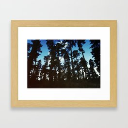 Tree Silhouettes Framed Art Print