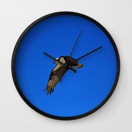 Osprey in Flight II Wall Clock