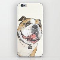 bulldog iPhone & iPod Skins featuring bulldog  by Laura Graves