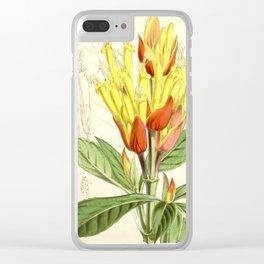 Sanchezia nobilis 5594 Clear iPhone Case