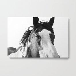Paint Horse | Modern Horse Art Metal Print