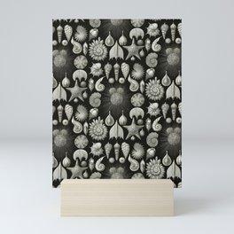Ernst Haeckel - Thalamphora (Seashells) Mini Art Print