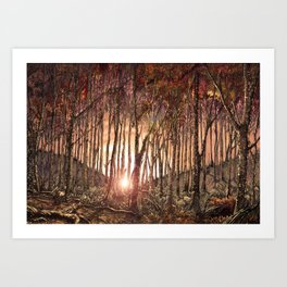 Forest at Sunset Art Print