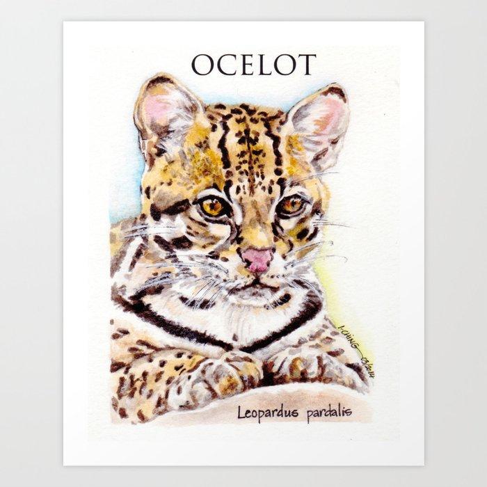 OCELOT: Leopardus pardalis Art Print