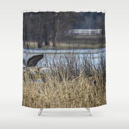 Great Blue Heron at Fern Ridge Shower Curtain
