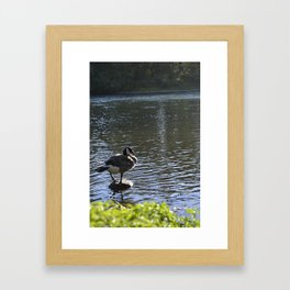 Canadian Goose 1 Framed Art Print
