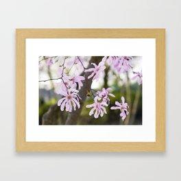 Pink Magnolia Framed Art Print