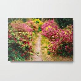 Footpath with azaleas Metal Print