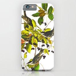 Blackpoll Warbler Bird iPhone Case