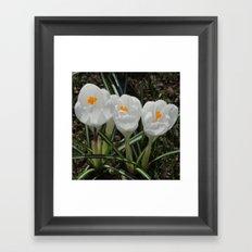 Three Little White Flowers Framed Art Print