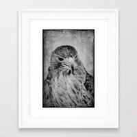 hawk Framed Art Prints featuring Hawk by SilverSatellite