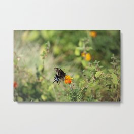 Black Swallowtail In The Garden Metal Print