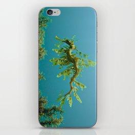 Leafy Sea Dragon Phycodurus eques iPhone Skin