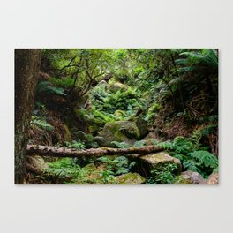 Wilsons Promontory Forest - Sealers Cove hike Canvas Print