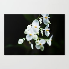 Wittle Orchids!  Canvas Print